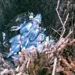 Woodpecker chicks inside the stump of the fallen palm tree.