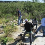 Tampa Electric team members donate time to add Florida-friendly plants along the boardwalk that leads to the new 50-foot wildlife observation tower at Tampa Electric's Manatee Viewing Center.