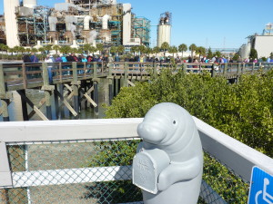 Like the mail, visitors come to Tampa Electric's Manatee Viewing Center during its open season (Nov. 1 to April 15) from around the world.