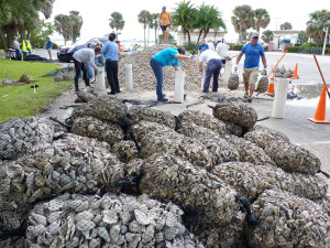 That's a lot of oyster shells.