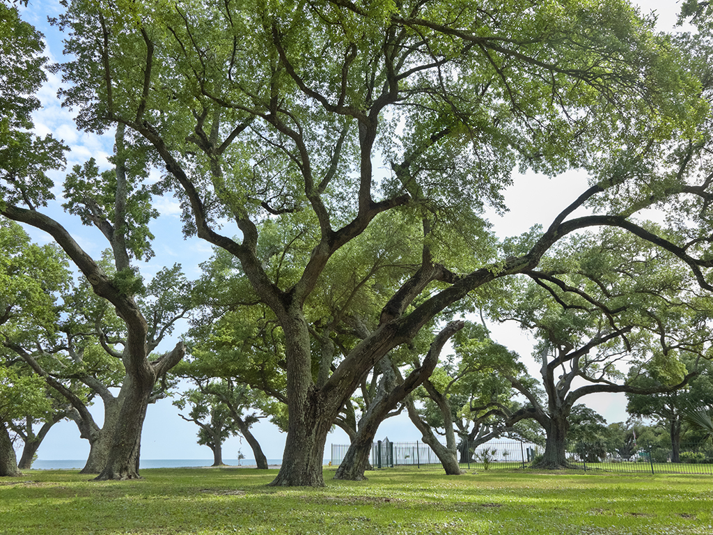 celebrate florida u0027s arbor day on jan 15 with free trees planted