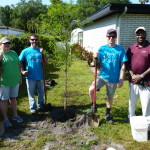In the center, one day to be a nice big tree providing lots of shade. From left, Melanie Ganas, John Webster, Adam Padgett and Andrew Blake at the home of a Temple Terrace resident.