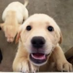 One puppy can add up to a whole lot of comfort and joy for a disabled veteran.
