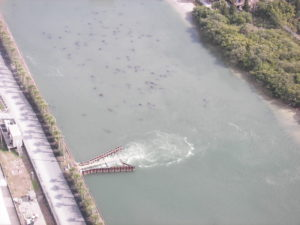 See all those dots in the water? Manatees by the dozens enjoy the clean, warm water of the Big Bend Power Station discharge canal.