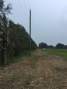 An example of what high-quality vegetation management looks like: trees near the power lines have been trimmed in a way that protects their health. With new equipment, we can do jobs like this faster and more effectively.